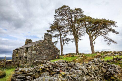 Drie Scottish pines