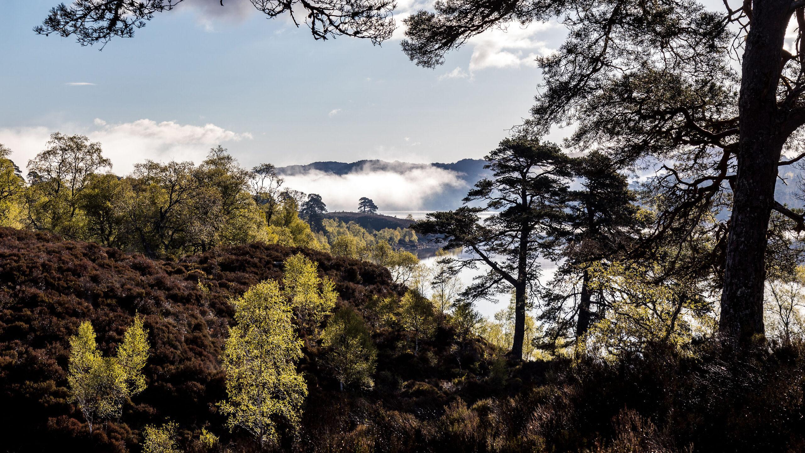 Glen Affric, Schotland 11